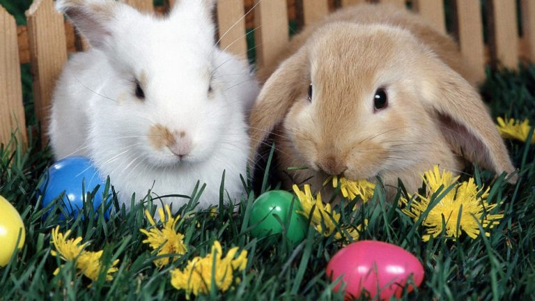 Cute Easter Bunny Images