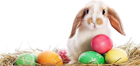Cute Easter Bunny Photos